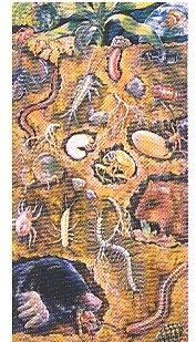 """Poster """"Sotto terra. Presenze animali utili alla fertilità del suolo"""""""