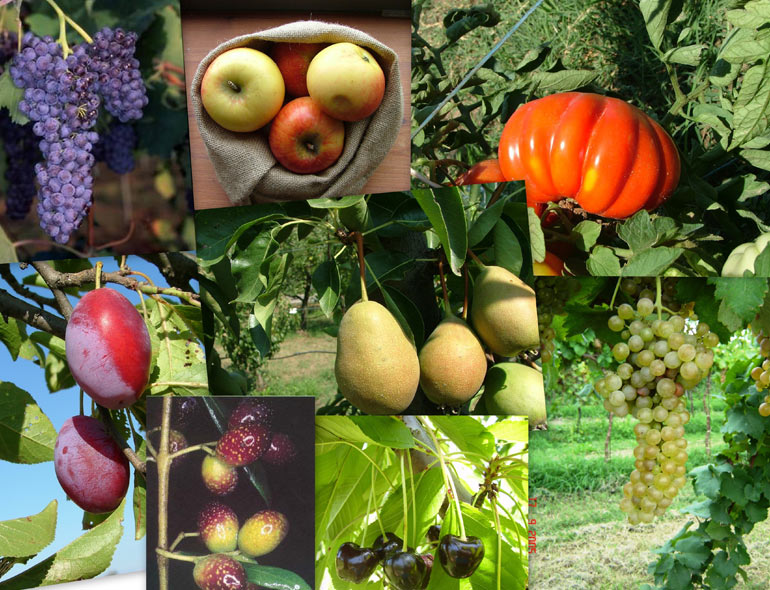 agrobiodiversita-RER